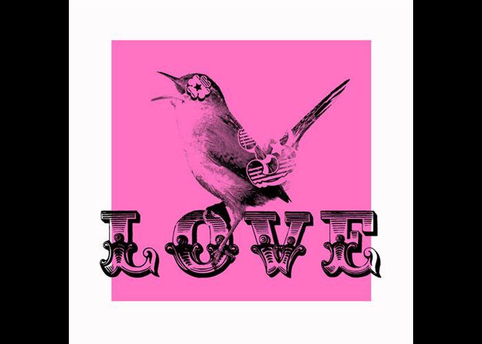Ben Allen - Pink Lovebird