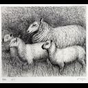 Henry Moore - Family